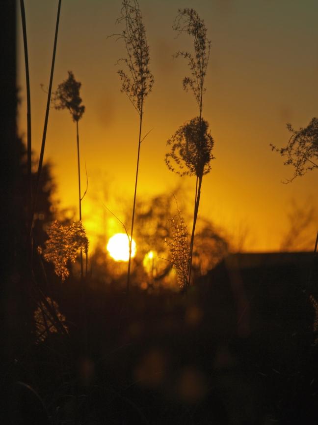 grass sun.jpg